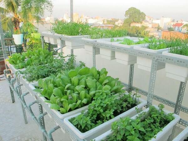 Chia sẻ kinh nghiệm trồng rau tại nhà