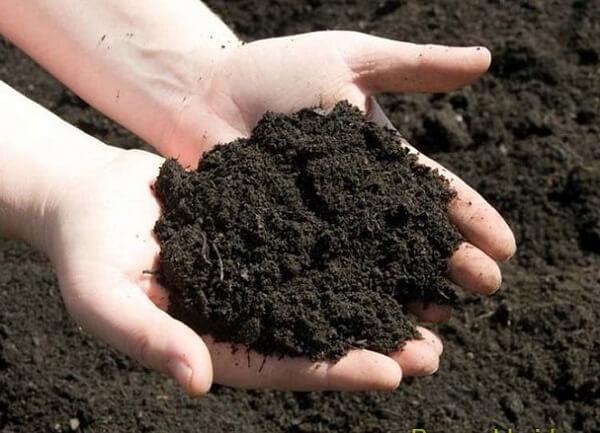 Chọn đất giống khi trồng