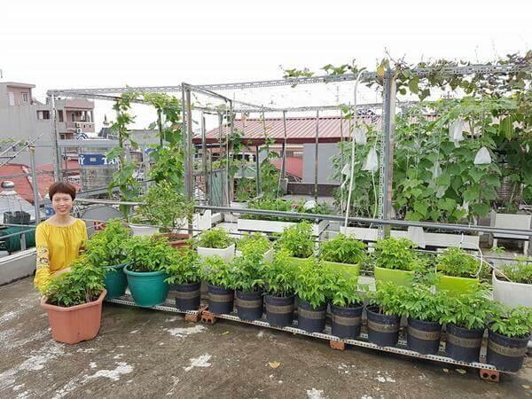 Kinh nghiệm trồng rau xanh trên sân thượng