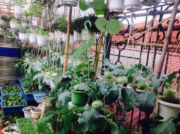 Tận dụng không gian trên cao để trồng cây