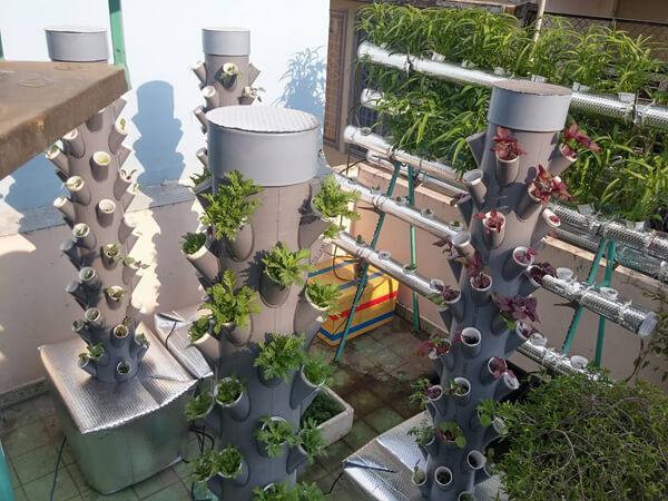 Trồng rau khí canh trên cột nhựa